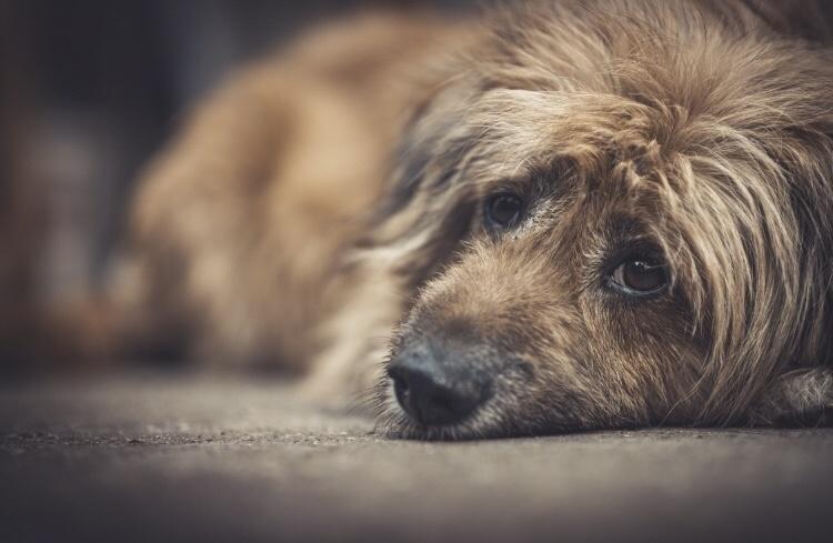Saiba como denunciar maus-tratos a animais