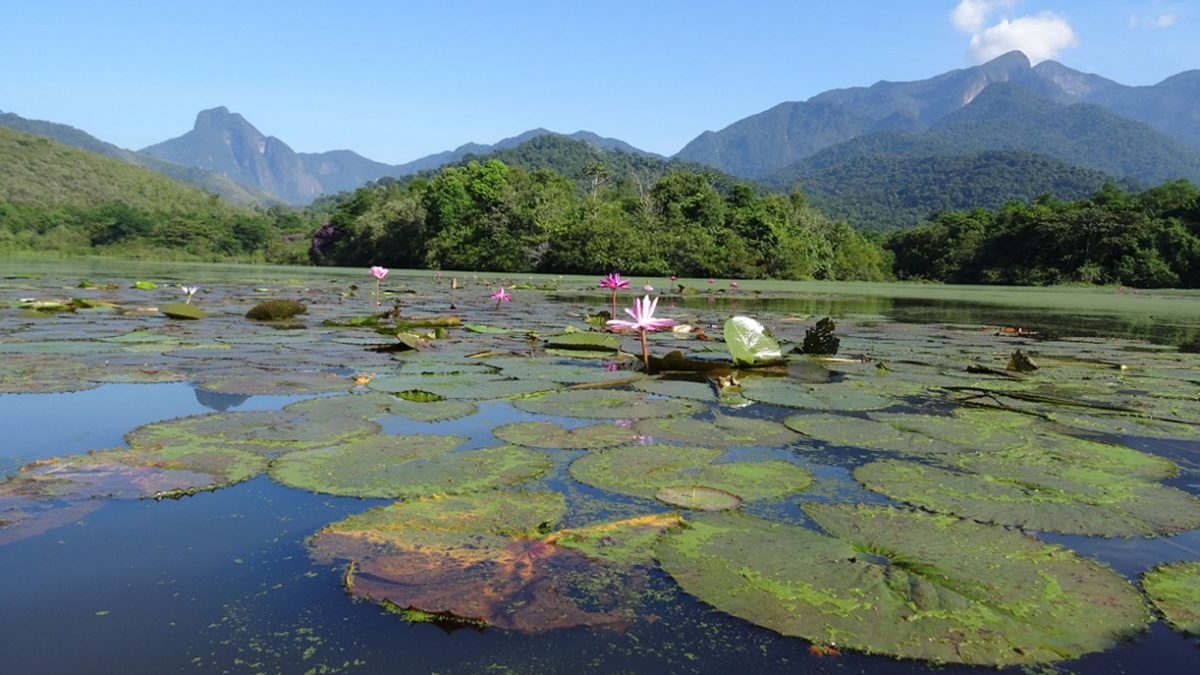 Parceiro Olho no Verde: parceria com municípios vai monitorar desmatamento no estado