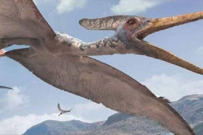 Brasileiro participa da descoberta de nova espécie de réptil voador