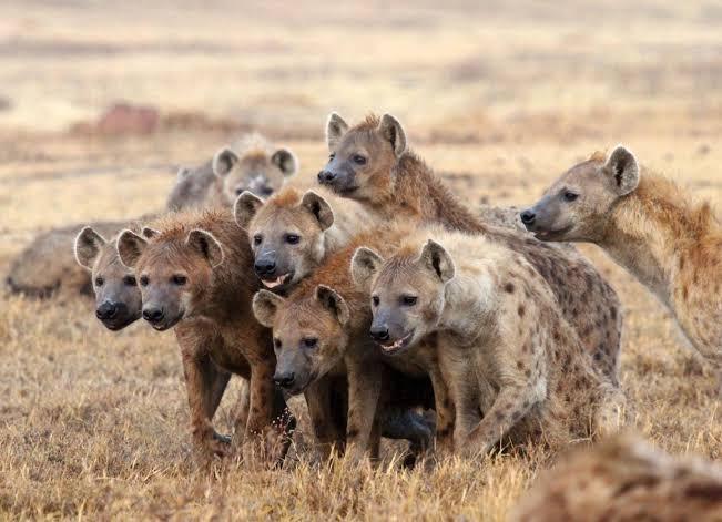 EDITORIAL – Com esses filhos, Bolsonaro não precisa de hienas