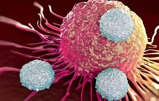 Cientistas descobrem célula que poderá tratar todos os tipos de câncer