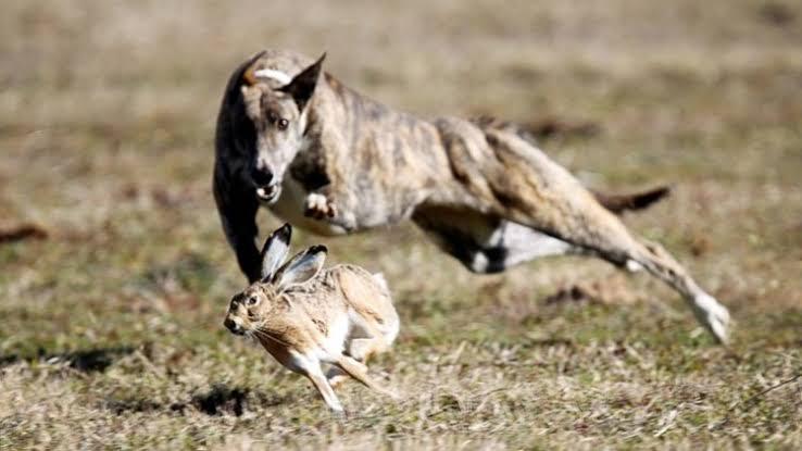 O dono do mundo será caçado como uma lebre