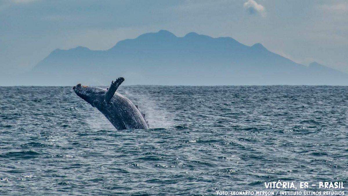 Turismo de observação de baleias é liberado no litoral do Espírito Santo