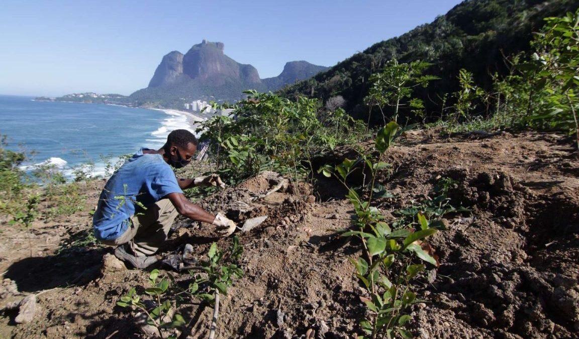 Prefeitura do Rio ameaça destruir renomado programa que já plantou mais de 10 milhões de árvores