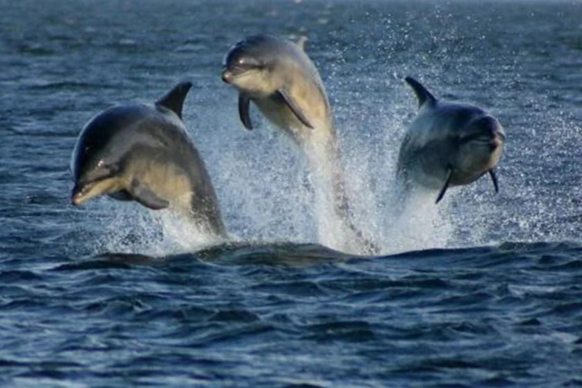 Baía de Guanabara Viva! Botos-cinza são avistados em busca de alimentos