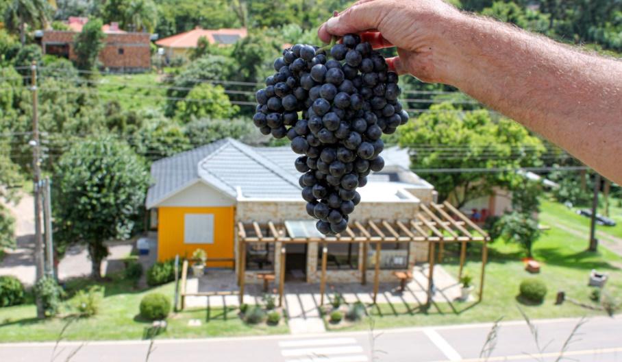 Focada em elaborar vinhos finos, Dom Bernardo é uma das melhores vinícolas que surgiram nos últimos anos