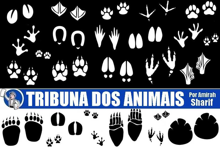 O amor incondicional dos animais