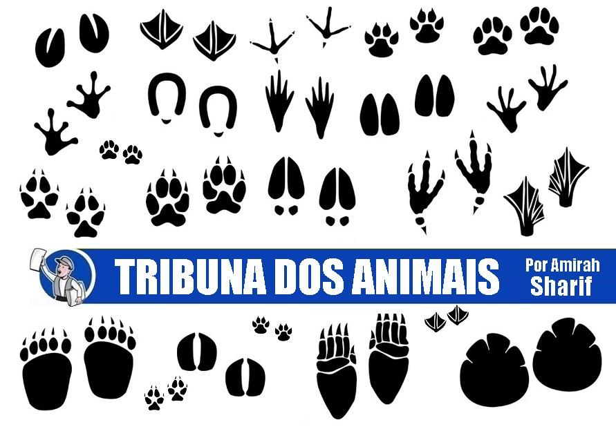 """""""TRIBUNA DOS ANIMAIS"""" estreia para seguirmos evoluindo"""