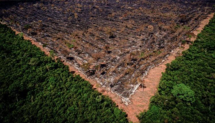 Demissão de Salles de nada adiantará, se a agenda ambiental do país continuar engavetada