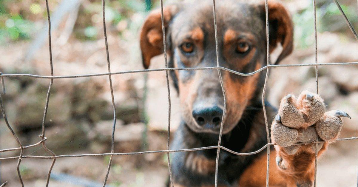 STF julga abate de animais apreendidos em situação de maus-tratos